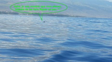 20170820_100706 dauphins copie.jpg*